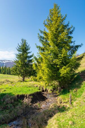 beautiful mountain landscape in springtime. trees on the grassy meadow. small brook in the valley. forested hills on the distant ridge with snow capped tops. idyllic scenery Stock Photo
