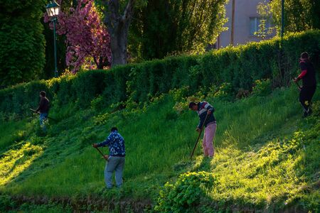 group of people scything the grass on a hump. lawn mowing in an old-school way on a sunny morning in springtime. location kyiv embankment in uzhgorod