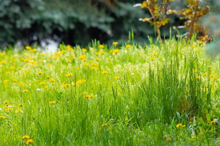 tall green grass close up. beautiful outdoor scenery on a sunny morning. freshness in nature concept Stock Photo