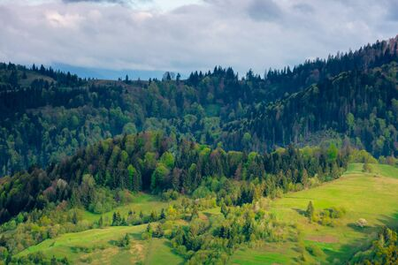 forest on the hills in spring. beautiful environment background in mountains. trees in colorful lush foliage in evening light