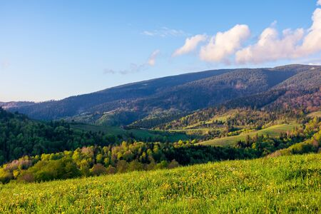 countryside scenery in mountains at sunset. beautiful landscape of carpathians with meadows rolling through forested hills in evening light. wonderful weather in springtime