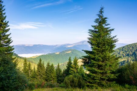 forest on the grassy meadow in mountains. beautiful sunny landscape with distant valley full of fog. amazing morning scenery Stock Photo