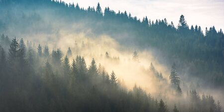 fog above the forest on the hill. mysterious foggy weather in the morning. fantastic mountain scenery Stock Photo - 145565689