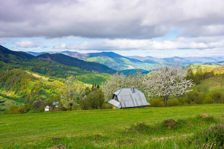 beautiful rural scenery in mountains. blossoming trees on the grassy hills. village in the distant valley. downshifting and sustainability concept
