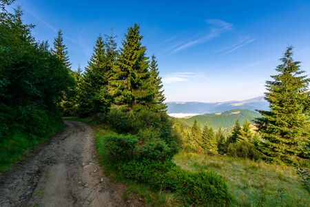 forest on the grassy meadow in mountains. beautiful sunny landscape with distant valley full of fog. amazing morning scenery. road uphill among the trees