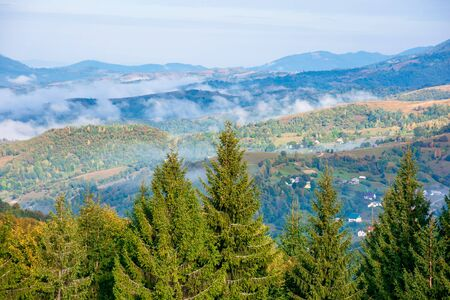 mountain landscape on early autumn morning.  open view with forest on the meadow in front of a distant valley full of fog. stunning nature scenery. separate ridges on both sides. sunny weather Stock Photo