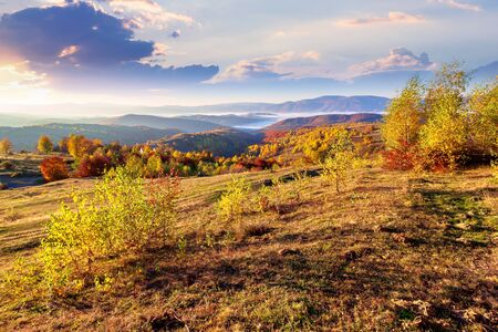 autumn sunrise in mountainous rural area. trees in golden foliage on the meadow in weathered grass. distant foggy valley.  ridge on the horizon. sky with clouds in morning light Stock Photo