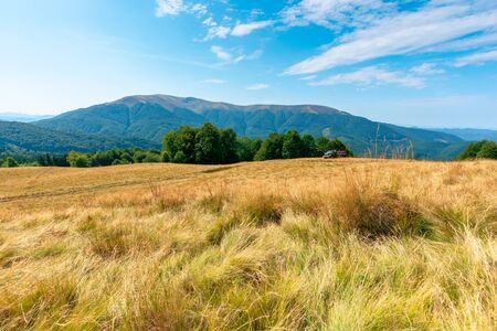 yellow grass on the meadow in mountains. beautiful nature landscape beneath a blue sky with fluffy clouds at high noon. Stock Photo