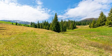 forest on the grassy meadow in mountains. beautiful sunny panorama of mountainous countryside. fluffy clouds on the blue sky