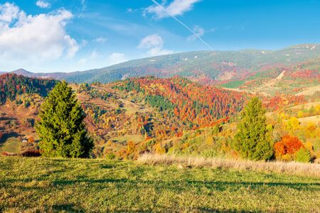countryside in autumn at sunset. mountain landscape with forests and meadows in evening light beneath a blue sky with fluffy clouds. colorful nature background
