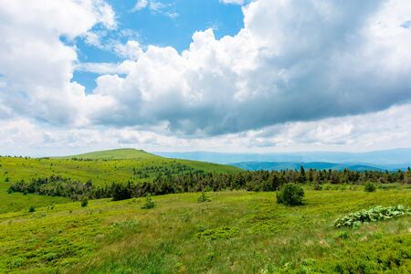 alpine meadows of mnt. runa, ukraine. coniferous forest in the distance. beautiful nature scenery of carpathian mountains in summer. cloudy weather Stock Photo