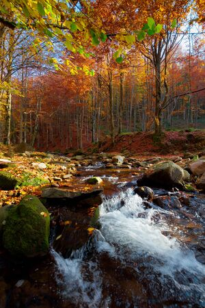 Mountain river in autumn forest. autumn landscape. rocks in the river that flows through forest at the foot of the mountain