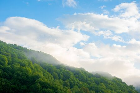 fog and mist above the forest. beautiful morning nature in mountains. landscape with clouds on the sky at sunrise. tranquil wonderland in summer Stock Photo