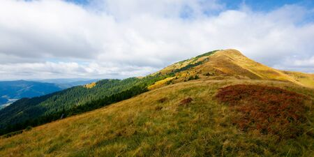 mountain in weathered grass in autumn. beautiful nature landscape of carpathians. cloudy sky in the distance. road to the  top