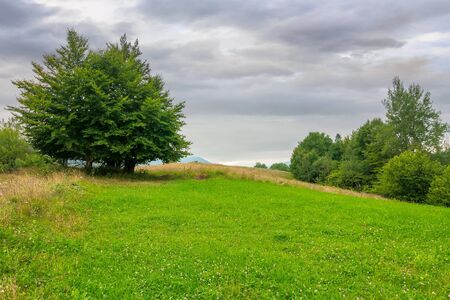tree on the grassy meadow in countryside landscape. stormy overcast weather in mountain. beautiful nature of rural scenery in summer Stock Photo - 148555541