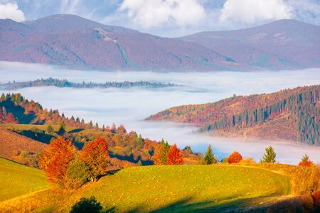 valley full of fog. autumn landscape at sunset. forest in colorful foliage on the grassy hill. beautiful mountain scenery in autumn. cloud inversion wonderful nature phenomenon Stock Photo