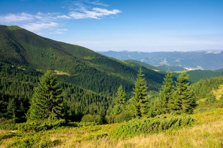 forest on the hillside. view in to the valley. green nature scenery concept. beautiful mountain landscape in summer. blue sky with some clouds in the morning above the distant ridge Stock Photo