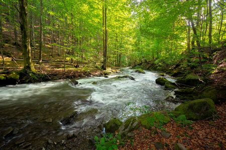 stream in the forest. beautiful nature background. peaceful scenery with water flow among rocks and beech trees in spring Stock Photo