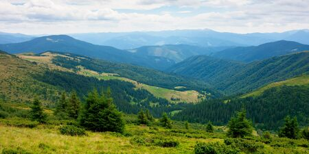summer landscape of valley in mountains. panoramic view. trees and green meadows on rolling hills. black ridge in the distance. beautiful nature of carpathians. cloudy sky