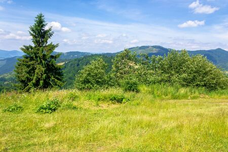 mountain scenery in summer. blue sky with clouds. green grass on the meadows. calm nature scenery of carpathian countryside Stock Photo