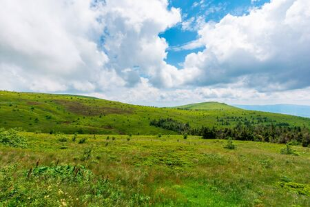 grassy meadows of mnt. runa, ukraine.  beautiful nature scenery of carpathian mountains in summer. cloudy weather Stock Photo