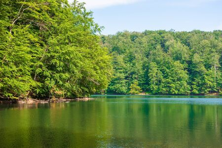 lake among beech forest of vihorlat mountains. calm nature landscape in summer. sky and trees reflecting in the water. sunny afternoon weather with fluffy clouds