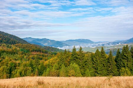 autumn evening in the misty valley. open view with forest on the meadow. beautiful landscape of carpathian mountains. sunny weather
