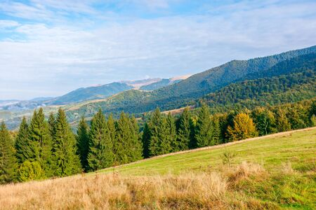 wonderful autumn landscape in evening light. open view with forest on the meadow in front of a distant valley. trees and yellowish grass on the hills. mountain ridge in the distance. blue sky with clouds on a sunny weather day