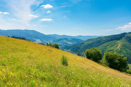 grassy mountain meadow in summer. idyllic landscape on a sunny day. scenery rolling in to the distant ridge. beautiful blue sky with puffy clouds