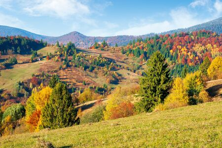 mountainous countryside in autumn. landscape with forests in fall colours and grassy meadows in evening light. blue sky with puffy clouds. colorful nature scenery Stock Photo