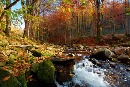 river on the autumn sunny day. wonderful landscape. forest in fall colors. mossy rocks on the shore. fresh and clean water concept