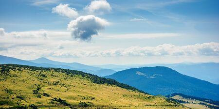 hills and valleys of carpathian mountains. trees and bushes on the grassy slopes.  beautiful landscape on a sunny day. clouds on the blue sky