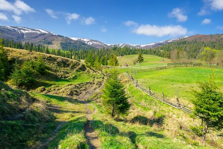 rural landscape in mountains. beautiful green summer scenery. trees and fields on the rolling hills. carpathian nature on a sunny day. ridge with snow in the distance