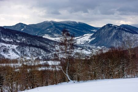 cloudy winter morning in mountains. tree on snow covered field. carpathian rural landscape. village in the distant valley