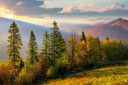 forest on misty morning in mountains. autumnal foggy sunrise background.