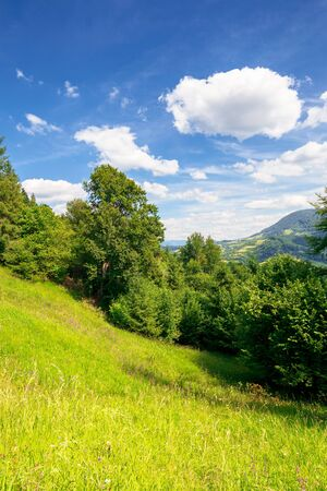 summer mountain landscape. trees on the green grassy hill. puffy clouds on the blue sky. idyllic scenery. view in to the distant valley on a sunny day Stock Photo
