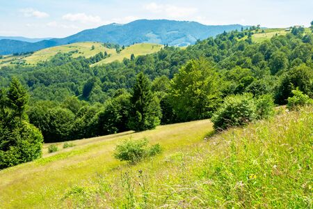 trees on the grassy hill. summer mountain landscape. wonderful weather on a sunny day. bright sky at high noon