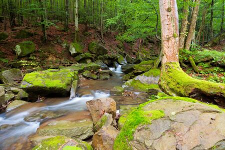 water stream among the rocks in the forest. summer nature scenery. freshness and calmness concept