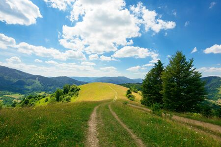 path through the meadow in mountains. sunny summer landscape of carpathian countryside. white fluffy clouds on the blue sky
