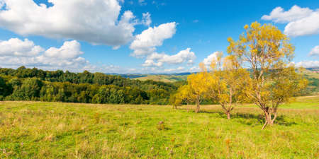 trees in yellow foliage on the hill. beautiful countryside scenery in autumn. sunny day in mountains. blue sky with fluffy clouds Stock Photo
