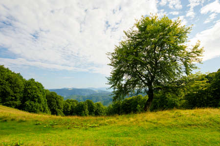 tree on the hill in green mountain landscape. beautiful nature scenery with grass on the meadow rolling in to the distance. fresh morning weather with clouds on the blue sky