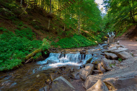 mountain river in the forest. fresh water stream from waterfall. beautiful nature background. wonderful summer landscape in the morning