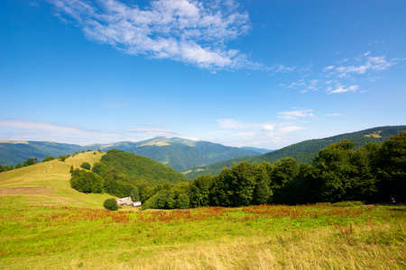 green meadow scenery on the hill. fluffy clouds on the blue sky above the distant mountain. bright summer weather. carpathian rural adventure concept