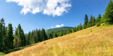 grassy meadows of mountainous scenery in summer. idyllic mountain landscape on a sunny day. beech and spruce forests around