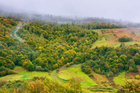 forest on mountain in mist at sunrise.  autumn landscape with rural fields on an overcast weather day. mysterious nature background