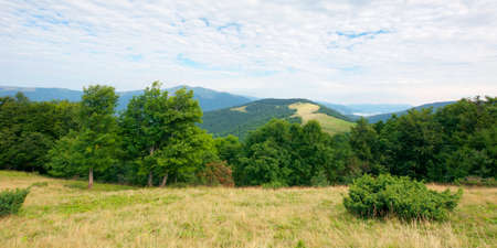 primeval beech forest in mountains. mountain landscape in summer. grass on the meadow. svydovets ridge in the distance. beauty of ukrainian carpathians nature