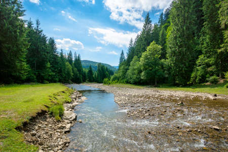 mountain river among the forest in valley. sunny summer landscape. green grass and rocks on the shore. white clouds on the blue sky