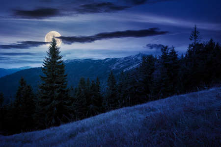 spruce forest on the hillside meadow at night. colorful grass in autumn. hills rolling in to the distance in full moon light. cloudy day Stock Photo - 152397142