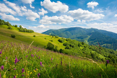 summer landscape in mountains. amazing scenery with wild herbs in fields on rolling hills of carpathians in dappled light. clouds on the blue sky above the distant ridge Stock Photo