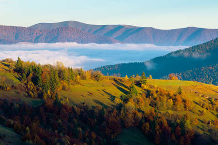 cloud inversion in mountains. carpathian autumn landscape. hills in in fall colors and morning light. valley full of fog in the morning. sunny weather